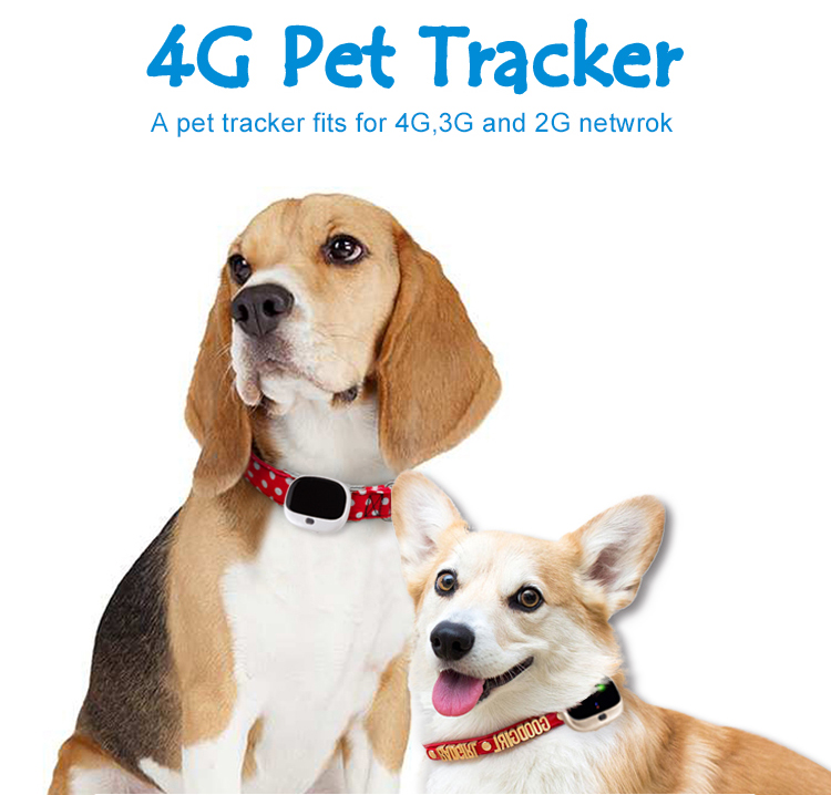 V43 Smart Waterproof Dog Collar LTE 4G Pet GPS Tracker